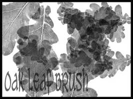 Oak Brushes
