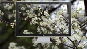 Blossom by 1mD-TasTLeSs
