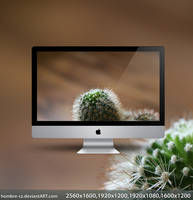 Cactus by hombre-cz