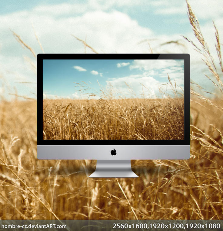 In the golden field wallpaper by hombre-cz
