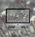 Silver grass - Nostalgia