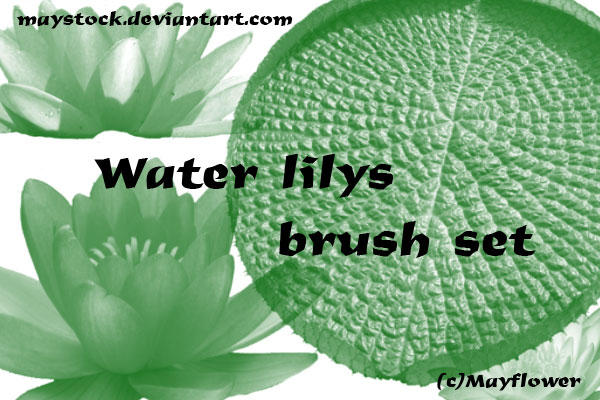 Water lilys brush set by maystock