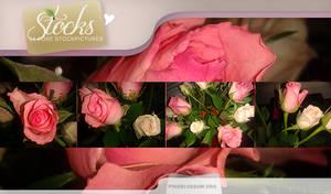 Stockpack: Roses