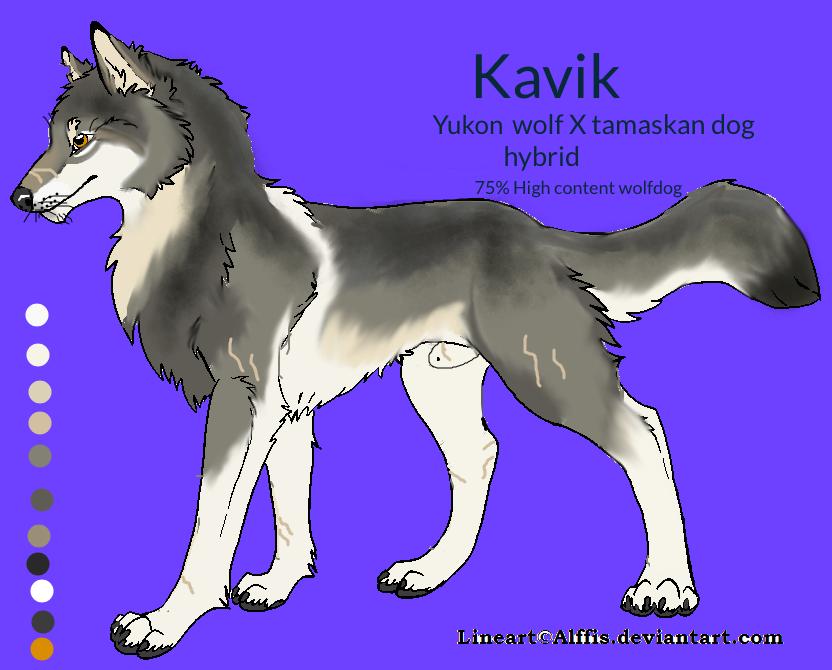 kavik wolfdog by winter alpha wolf on deviantart