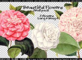 Flowers PNG by Yannettee