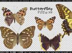 Butterflies PNGs