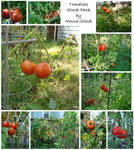 Tomatoes Stock Pack