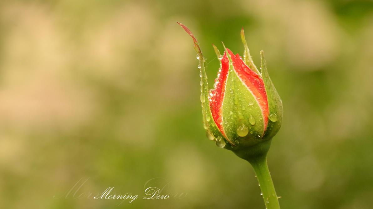 Morning Dew by Bagdadi