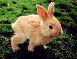 Cute little bunny .psd