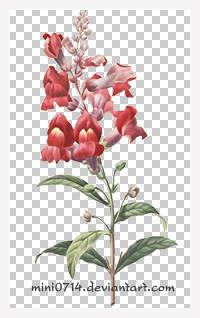 flower001 by mini0714