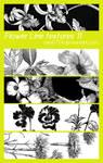 Flower Line textures 11