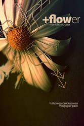 Flower .wall collab. by mauricioestrella