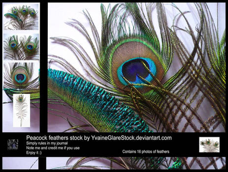 16 Peacock Feathers Stock