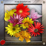 High resolution: Flowers png