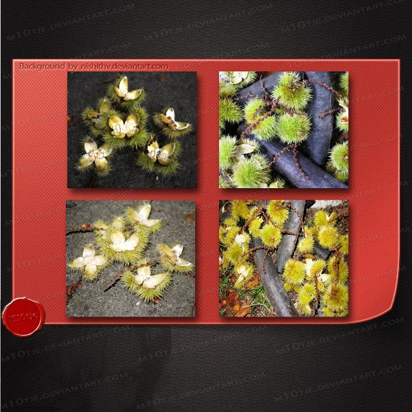Set of 4 autumn - chestnut images by M10tje