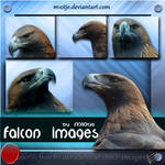 Falcon set of 5 png's