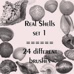 Real shells set 1