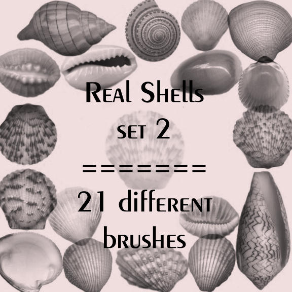 Real shells set 2 by rL-Brushes