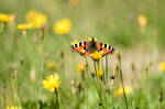 Butterfly 150821