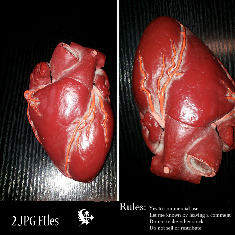 Real human heart images - photo#21