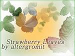 Strawberry Leaves Brush