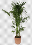 Palm Leaf 3- Stock - Png