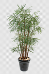 Palm Leaf 4 - Stock - Png