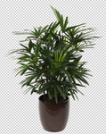Palm Leaf 5 - Stock - Png