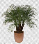 Palm Leaf 6 - Stock - Png