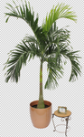 Palm Leaf 7 - Stock - Png