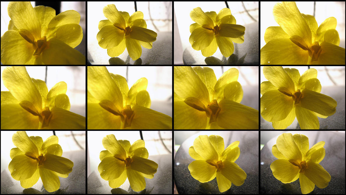 Free Backlit Yellow Flower Stock by DreamWarrior