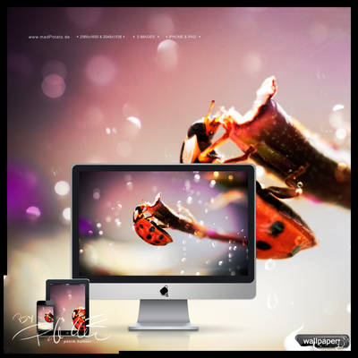 Ladybug - Wallpaper-Edition