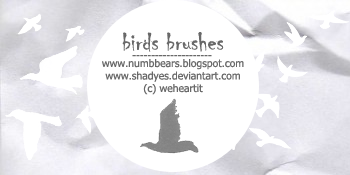 birds brushes by shadyes