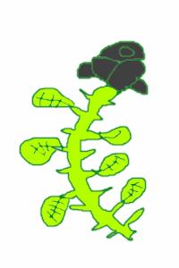 Black Rose / Green Star (Hiveswap Fan Theory) by AlecciaRosewater