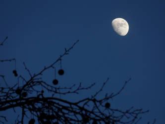 Sunset Moon by Musicaloris