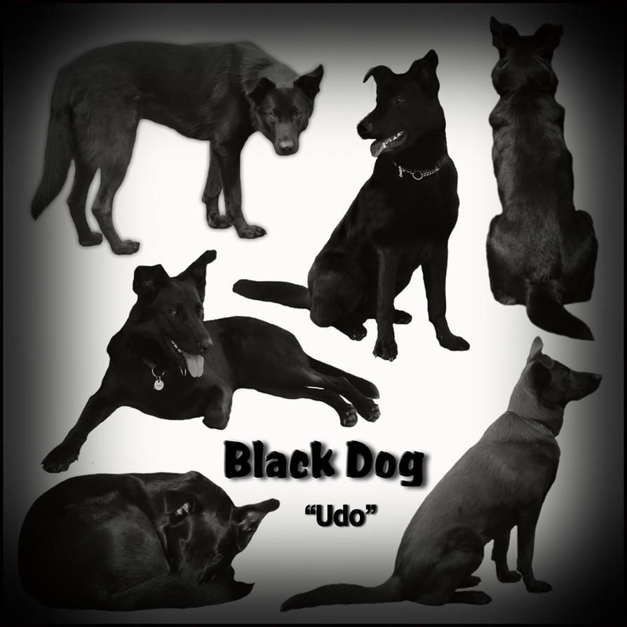Black Dog by BFstock