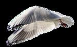 Seagull 6 Clear Cut