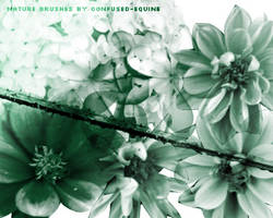 Brushes: Nature by confused-stock