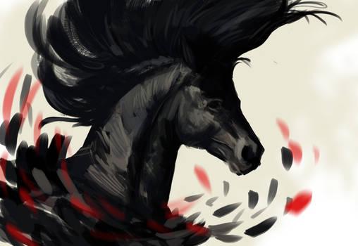 Black horse  study