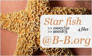 Star fish by Basically-Birds