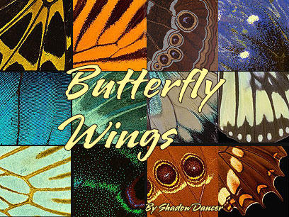 Butterfly Wing Textures by Shadoweddancer