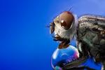 Bubble Fly by Metkan