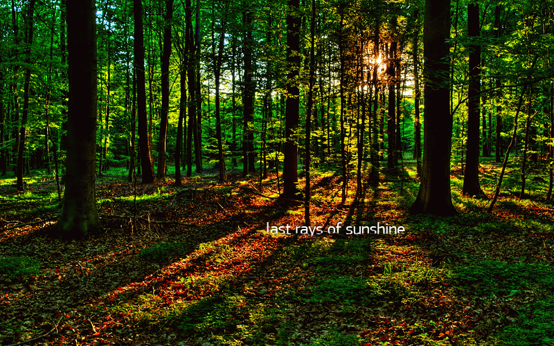 Last Rays Of Sunshine by salmanarif