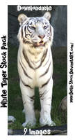 White Tiger Stock Pack 9Images