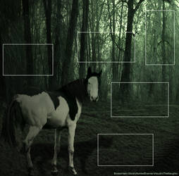 Dark Forest Dreams