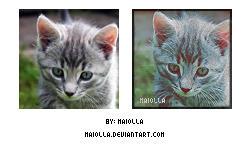 Kitten psd