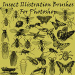Insect Illistration Brushes PS