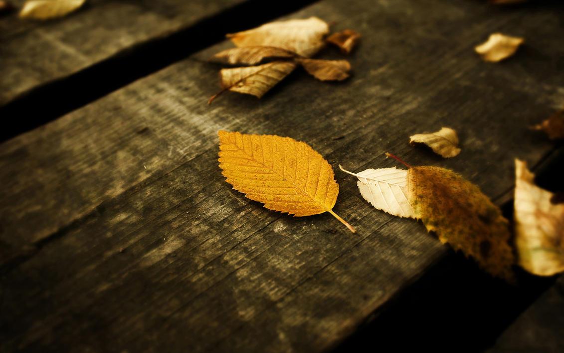 Leaves Wallpaper by SvenMueller