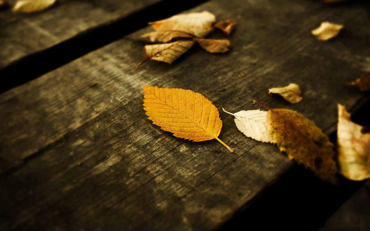 Leaves Wallpaper by SvenMueller