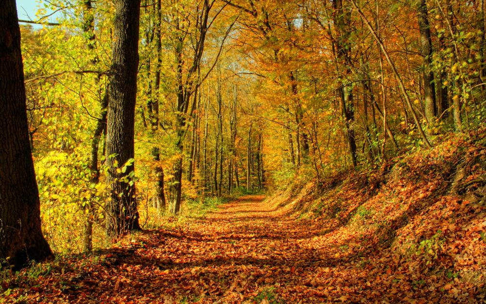 Autumn Wallpaper II by SvenMueller